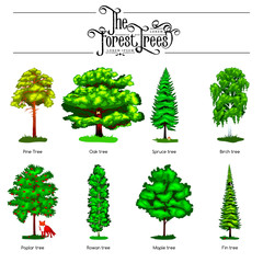 Summer Green Forest Tree isolated on white background. Cartoon vector set trees in outdoor park. Outdoor trees in the park with branch and leafs. Pine tree oak spruce birch poplar rowan maple fin