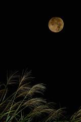 お月見イメージ ススキと月