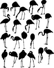 set of twenty one flamingo silhouettes isolated on white