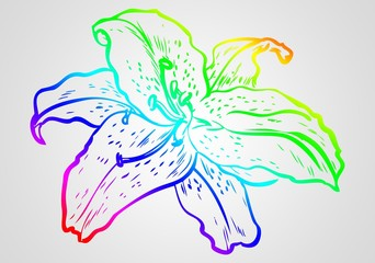 flower illustration on different background