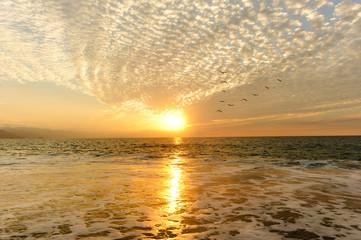 BOcean Sunset Birds