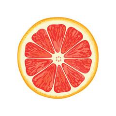 vector illustration of grapefruit