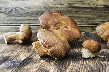 Placer white wild mushrooms