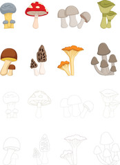 different kinds of mushrooms with coloring book