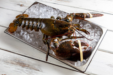 Raw lobster laying on ice. Lobster with tied claws. Seafood is the best delicacy. It's time to cook.