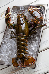 Raw lobster with tied claws. Brown lobster and ice cubes. Sea creature with strong shell. Claws and jaws.