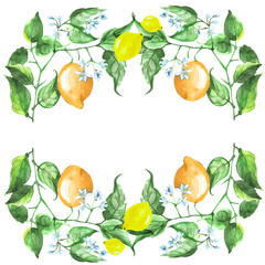 Frame for invitations, greeting cards and other design. From watercolor elements - fruits, lemon, flowers and lemon leaves.