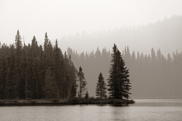 Foggy forest waterfront