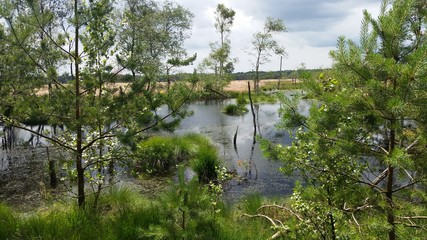 Pietzmoor in der Lüneburg Heide