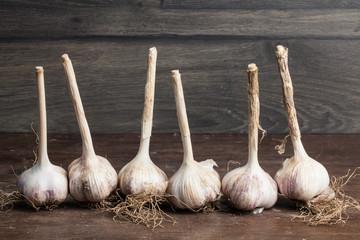 fresh garlic bulbs with long stalk on wood table