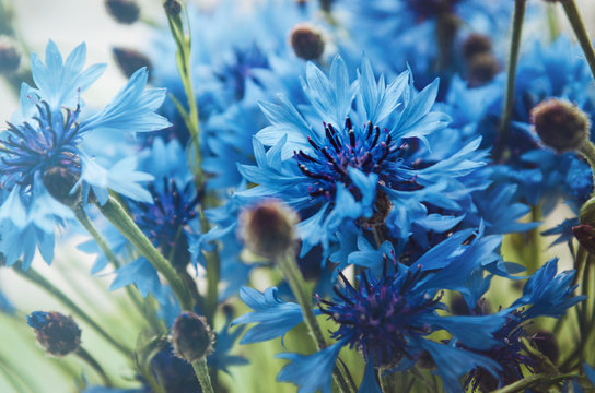 Blue bouquet of cornflower flowers with bokeh and copy space, floral  abstract background. Summer time. Rustic style. Macro image. Place for text. Selective focus.