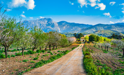 Beautiful Landscape of Majorca Spain Balearic Islands