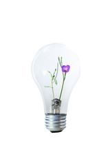 Light Bulb And Flower