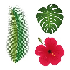 Tropical plants. Set. Hibiscus. Palm leaf. Monstera leaf.
