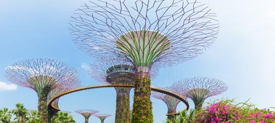 Foto op Plexiglas Singapore Supertree Grooves