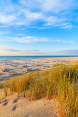 Wall Mural - Grass on sand dunes at sunset time on a beach in Leba, Baltic Sea, Poland