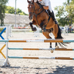 Equestrian jumping competition background