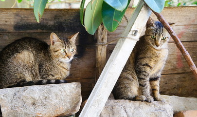Two adorable kitties sitting on rocks outdoors