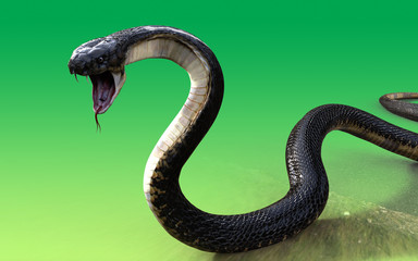 Close-Up 3d King cobra snake isolated on green background, cobra ...