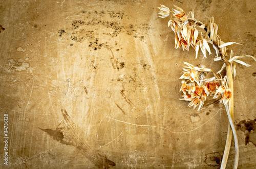 Orchidea Essiccata Su Antica Carta Pergamena Sfondo Vintage Stock