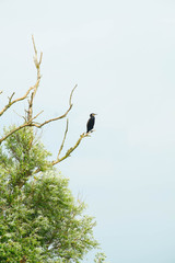 Lonely bird sitting on bare tree branch