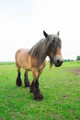 Wild horses in an open field