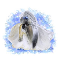 Watercolor closeup portrait of cute Shih Tzu, Chinese Lion Dog breed dog isolated on white background. Full show coat Chinese toy dog with bow. Hand drawn sweet home pet. Greeting card design clip art