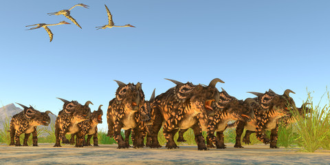 Einiosaurus Dinosaurs - Quetzalcoatlus flying reptiles fly over a herd of Einiosaurus dinosaurs during the Cretaceous Period.