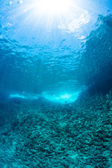 Wall Mural - Sunlight into Underwater