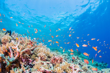 Coral Reef and Colorful Fishes