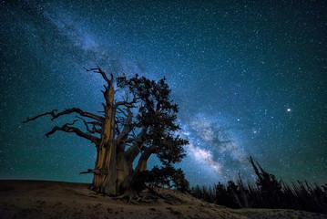 Bristlecone pine, rising Milkyway, Utah