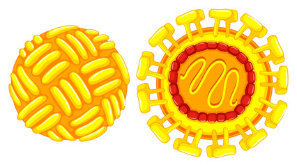 Close up diagram of zika virus