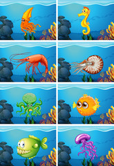 Scenes with sea animals under the sea