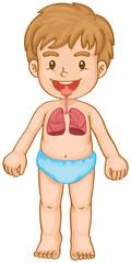 Respiratory system in human boy