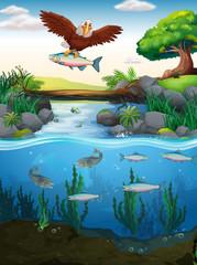 In de dag Fantasie Landschap Eagle catching fish in the river