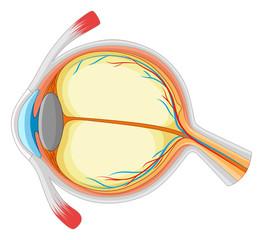 Human eye with disease