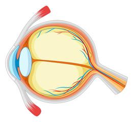 Diagram of eyes disease