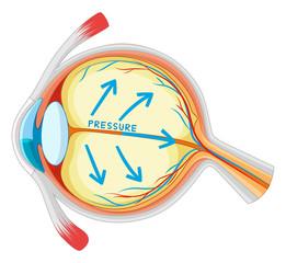 Eyes disease in closer look