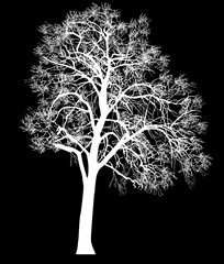 high white isolated bare tree