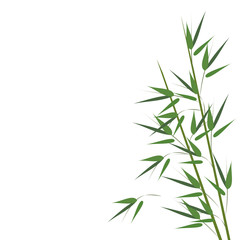 Bamboo sprouts. Hand drawn vector illustration on white background