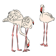 Pink flamingo. Vector illustration drawn by hand.