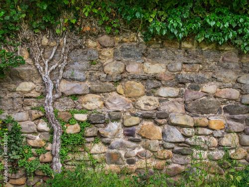 alte mit pflanzen bewachsene natursteinmauer stockfotos und lizenzfreie bilder auf. Black Bedroom Furniture Sets. Home Design Ideas