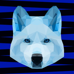 Abstract polygonal geometric triangle blue wolf portrait