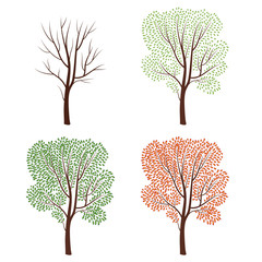 Four seasons nature concept. Tree silhouette isolated set. Plant stages