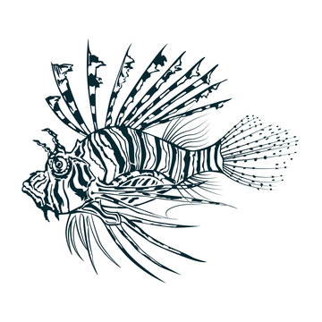 Black and white vector image of lionfish engraving style