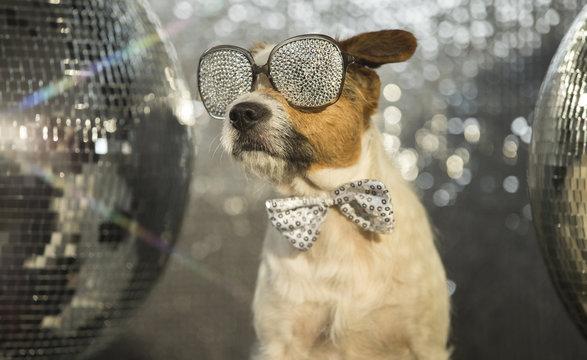dog disco