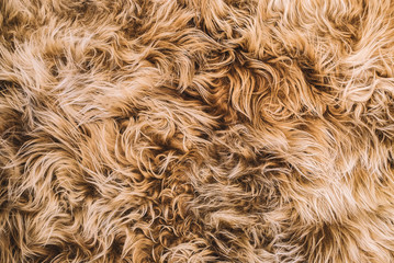 Light Brown Curly Hair Fur Texture Wall mural
