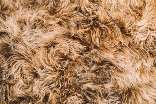 quotlight brown curly hair fur texturequot stock photo and