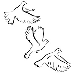 Vector collection set of flying doves silhouettes isolated on white background. Pigeon hand drawn black contours. Peace dove symbol icon sign. Graphic design birds close up. Clip art illustration