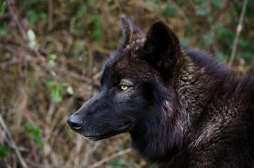 Black Wolf Look